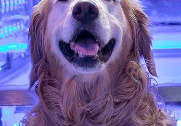 TESTIMONIAL Blu Pet Dog Dodges Surgery